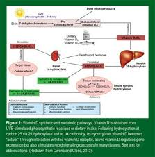 vitamin d measurement supplementation what when why how