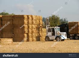 Tractor Moving Stacks Hay Onto Truck Stock Photo (Download Now ... Kims County Line In Its Hday Small Hay Truck Stock Image Image Of Biological Agriculture 14280973 Truck Hauling On Farm With Family Help Men Riding Trailer Full With Bales Of Hay Straw Free Stock Photo Public Domain Pictures Hauling Bmt Members Gallery Click Here To View Our Members A Large Central Washington State Delivers Winter Crownline Beds Farm Source Sales Old Rusting Vintage Full Pumpkins And 2009 Dodge Feed Hydraulic Spike T S Feeder