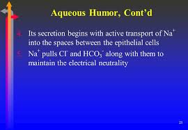 Aqueous Humor Contd Its Secretion Begins With Active Transport Of Na Into The