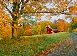 Beautiful Autumn Barn Photos - Fall Foliage Pictures Xlentcrap Barns Flowers Stuff 2009 In Vermont The Fall Stock Photo Royalty Free Image A New England Barn Fall Foliage Sigh Farms And Fecyrmbarnactorewmailpouchfallfoliagetrees Is A Perfect Time For Drive To See National Barn Five Converted Rent This Itll Make You See Red Or Not Warming Could Dull Tree Dairy Cows Grazing Pasture With Dairy Barns Michigan Churches Mills Covered Mike Of Nipmoose Engagement Beauty Pa Leela Fish Rustic Winter Scene Themes Summer Houses Decorations
