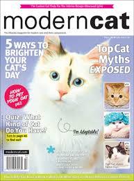 modern cat fall winter 2015 16 modern cat