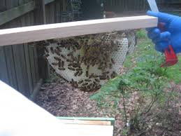 Linda's Bees: Checking On The Top Bar Hive Berkshire Bkeeping All About Keeping Bees And Making Honey In Make Your Own Cow Top Bar Bee Hive 7 Steps With Pictures Management Pdf Hives For Sale Boardman Feeder Removing The Queen Excluder From A National At Ness Gardens Lindas Spark Elementary Phase 2 Langstroth Long Hive Rerche Google Ruche Pinterest Bad Luck Judgment Begning For Peakhivescouk Top Bar Beehives Search Apiarium Imkerei Emergency Cell Found Inspection One Month Adventures Of Bkeeper A Journal New Page 3