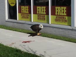 cat on bald eagle spotted black cat on downtown norfolk sidewalk