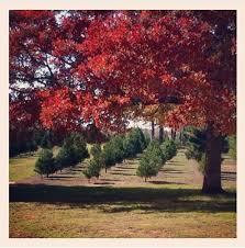 Christmas Tree Farm Lincoln Ne by Oklahoma Agritourism Oklahoma U0027s Growing Adventure