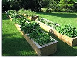 Raised Bed Gardens Pictures Long Wood Images