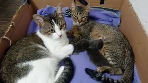 cat wont eat nursing cat won t eat the cat site
