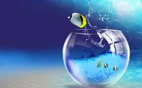 aquarium fond d écran animé avec des poissons applications