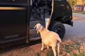 Goat Loves UPS Driver | PEOPLE.com Pets As Pilgrims Photos Peoplecom Contra Costa Animal Services Home Facebook 180 Best Dog Of Honor Images On Pinterest Marriage Wedding Dogs Bird 5 Darnick Street Underwood Qld 4119 Indtrialwarehouse For Pet Food Care Accsories Big W 91 Dogs In Weddings Shop Warehouse Buy Supplies Online Petbarn 332 Of Course My The Hooves And Paws Rescue Heartland Inc A Place To Heal