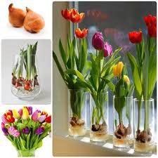 garden design garden design with planting tulips home and garden