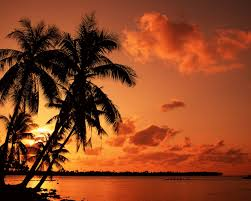 Drawn Palm Tree Beach Sunset