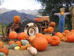 Pumpkin Patch Lafayette La by Best 25 Pumpkin Patches Ideas On Pinterest Pumpkin Field