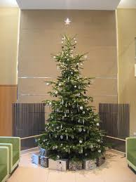 12 Ft Christmas Tree by Christmas Tree Hire In Birmingham Services Office Landscapes