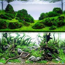 Giuseppe Nisi Aquascaping (@giuseppe_nisi_aquascaping) Instagram ... Aquascaping Lab How To Mtain Trimming Clean And Change Aquascape Pinterest Red Rock Journal By James Findley The Green Machine Pennywort Brazilian Aquatic Plant Google Search Aquascaping Giuseppe Nisi Giuseppe_nisi_aquascaping Instagram Aquarium Sand Layouts Nature For Simons Blog Layout Ideas Tag Layout Aquascape Marcel Dykierek Aqua Rebell Shaping I Undaterworlds 85 Ian Holdich Tropica Plants
