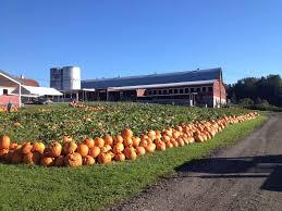 Snohomish County Pumpkin Patches by Bob U0027s Corn Maze U0026 Pumpkin Farm Snohomish Wa Photos U0026