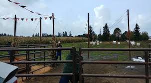 Hunter Farms Pumpkin Patch Olympia Wa by Hunter Family Farm Llc Home Facebook