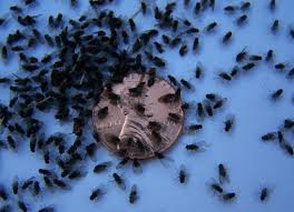 kitchen sink Ants In Kitchen Sink Small Make Dirty Your 1 ing