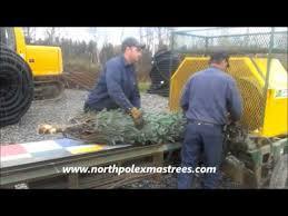 Christmas Tree Baler by Christmas Tree Baler Youtube