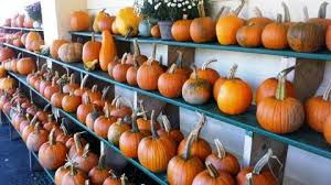 Chatham Kent Pumpkin Patches by Your Guide To Pumpkin And Apple Picking And Halloween Events Near