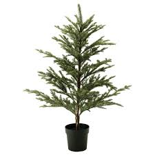 Plantable Christmas Trees For Sale by Plant Pots U0026 Plants