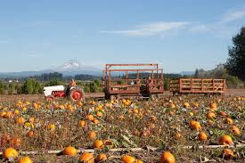 Pumpkin Patch Portland by Bushue U0027s Family Farm