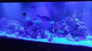 Halloween Hermit Crab by Clean Up Crew With Eel Reef2reef Saltwater And Reef Aquarium Forum
