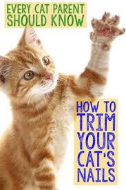 how to cut a cats nails the epic cat nail clippers buyers guide cat magazine