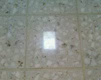 Cleaning Terrazzo Floors With Vinegar by Terrazzo Floor Care Terrazzo Floor Refinishing Tampa Bay Area