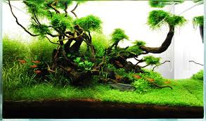 Layout 71 - James Starr-Marshall - Tropica Aquarium Plants Aquascaping Lab How To Mtain Trimming Clean And Change Aquascape Pinterest Red Rock Journal By James Findley The Green Machine Pennywort Brazilian Aquatic Plant Google Search Aquascaping Giuseppe Nisi Giuseppe_nisi_aquascaping Instagram Aquarium Sand Layouts Nature For Simons Blog Layout Ideas Tag Layout Aquascape Marcel Dykierek Aqua Rebell Shaping I Undaterworlds 85 Ian Holdich Tropica Plants