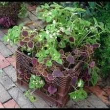 Milk Crate Planter Photo Credit Daves Garden