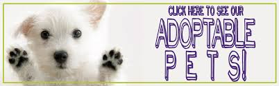 Small Non Shedding Dogs For Adoption by Adopt A Pet Search Adoptable Pets