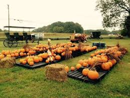 Pumpkin Patch Church Wilmington Nc by Pick Your Own Muscadine Grape Vineyards In North Carolina