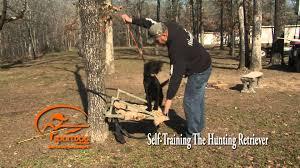 Chesapeake Bay Retriever Shed Hunting by Vid 3 Teaching The
