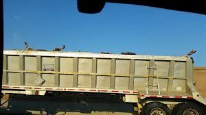 100 Cow Truck Dead Cow Truck Album On Imgur