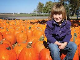 Great Pumpkin Patch Arthur Il by The Great Pumpkin Patch In Arthur Illinois
