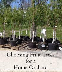 Fresh Small Backyard Orchard | Architecture-Nice Backyard Farming Photo On Marvelous Fruit Trees Texas Plant A Tiny Orchard Hgtv Dwarf Peach Tree Peaches And Ctarines Pinterest 81 Best Pattern 170 Images On Garden And Berries In Small Mesmerizing 3 Fruit Trees For Small Space Yards Patios Youtube Backyards Gorgeous 135 Good For Yards Splendid Interesting Pics Decoration Inspiration Best To Grow Cool Glamorous Privacy Design 25 Ideas Patio