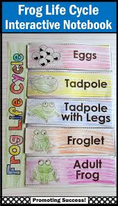 Life Cycle Of A Pumpkin Seed Worksheet by Best 20 Life Cycle Of Frog Ideas On Pinterest A Frog Life
