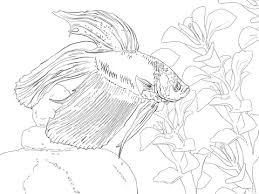 Click To See Printable Version Of Siamese Fighting Fish Coloring Page