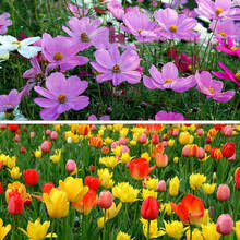 buy discount flower bulbs and get free shipping on aliexpress