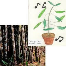 zimmerpflanzen eisen bambus und tanzende pflanze zwei schöne