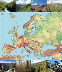mountain ranges of europe a walk on the side disturbance dynamics and the conservation