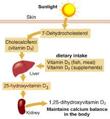 Uv Lamp Vitamin D Supplement by Why I Don U0027t Take Vitamin D Supplements Getting Stronger