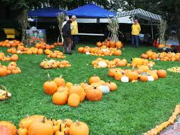 Pumpkin Picking Places In South Jersey fall fun awaits at local farms manasquan nj patch