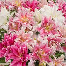flowers bulbs more white flower farm