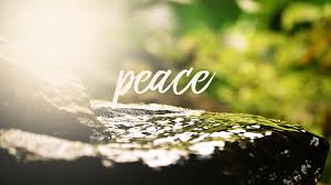 The Word Peace In A Forest Setting