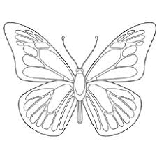 Blue Morpho Butterfly Coloring Pages