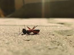 ameisen im haus tipps hausmittel gegen ameisen otto