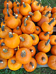 Pumpkin Fest Franklin Tennessee by Nashville Fall Family Fun Blonde Mom Blog