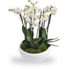 soins orchidee en pot 28 images cultiver les orchid 233 es en