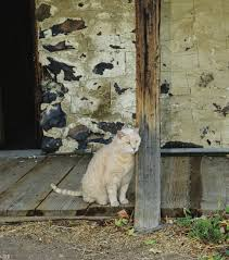 Free Images : Wood, Old, Barn, Animal, Cute, Wall, Pet, Rural ... Ferals Strays And Barn Cats Cat Tales Tuesdays Fun And Aww My Moms Is Gorgeous Viralspell The Care Feeding Of Timber Creek Farm Program Buddies Seeking Support For Its Catsaving Efforts Adoption Barn Cats Near Bardstown Ky Petfinder For Green Rodent Control Turn To Barn Cats The Flying Farmers Free Images Wood Old Animal Cute Wall Pet Rural Sitting On Top Of Bales Straw Ready To Pounce Stock Weve Got Hire Central Missouri Humane Society By Jsf1 On Deviantart