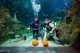 Spirit Halloween Denton Tx by Underwater Halloween Pumpkin Carve Off At Sea Life Grapevine